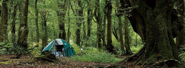 テントの張り方 木の下