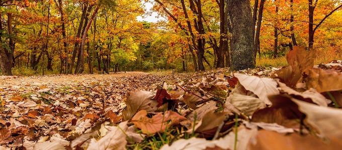 焚き火を楽しむ秋冬キャンプ a